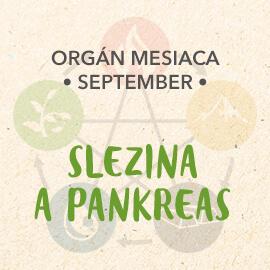 Organ mesiaca Septembera - Slezina a pankreas