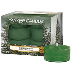 Aromatické čajové svíčky Evergreen Mist 12 x 9,8 g