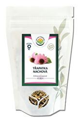 Echinacea - třapatka kořen