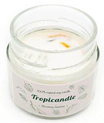 Tropicandle - Blooming jasmine