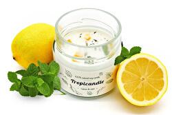 Tropicandle - Lemon & mint